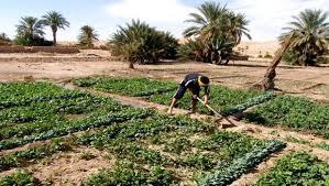 Algérie agricole.jpg